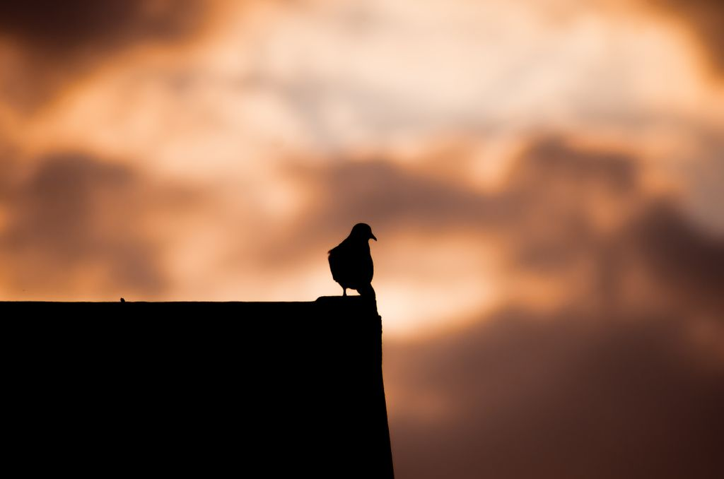 Bird on a roof top silhouette Nikon D7000 70-300mm lens